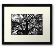 Creeping Gloom Framed Print
