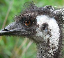 Emu by DiCroz