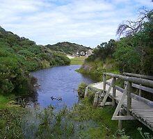 Pond by miyuki