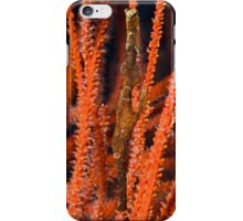 Ghost Pipefish, Kimbe Bay, Papua New Guinea iPhone Case/Skin