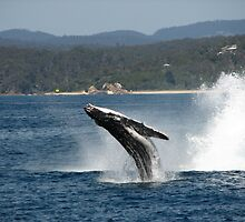 Whale Calf Breech by David  Kembrey