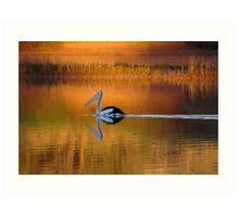Pelican at Sunset Diamantina River Art Print