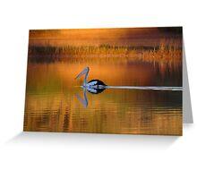 Pelican at Sunset Diamantina River Greeting Card