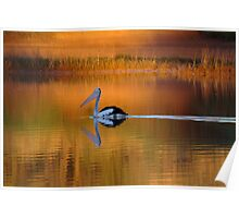 Pelican at Sunset Diamantina River Poster