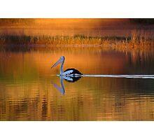 Pelican at Sunset Diamantina River Photographic Print
