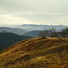 Top of Mt Blue Rag,High Country by Joe Mortelliti