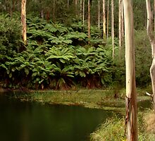 Billabong, Otway Ranges by Joe Mortelliti