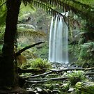 Hopetoun Falls, Otway Ranges forrest by Joe Mortelliti