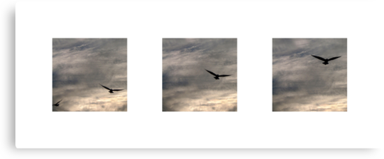 let birds fly above the earth across the expanse of the heavens by Devan Foster