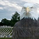 Honor Our Veterans on 11/11/14 by barnsis