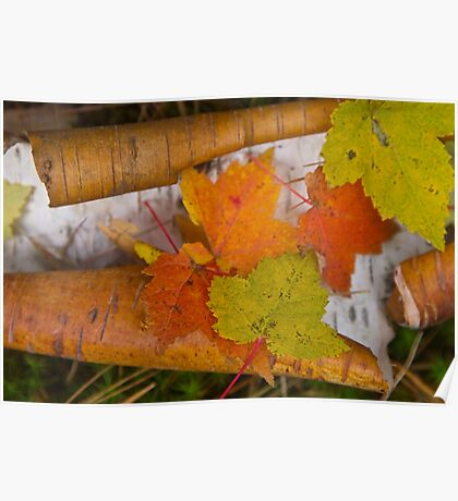 Leaves and Bark Poster