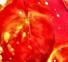 autumn.luminated IV by Janet Leadbeater