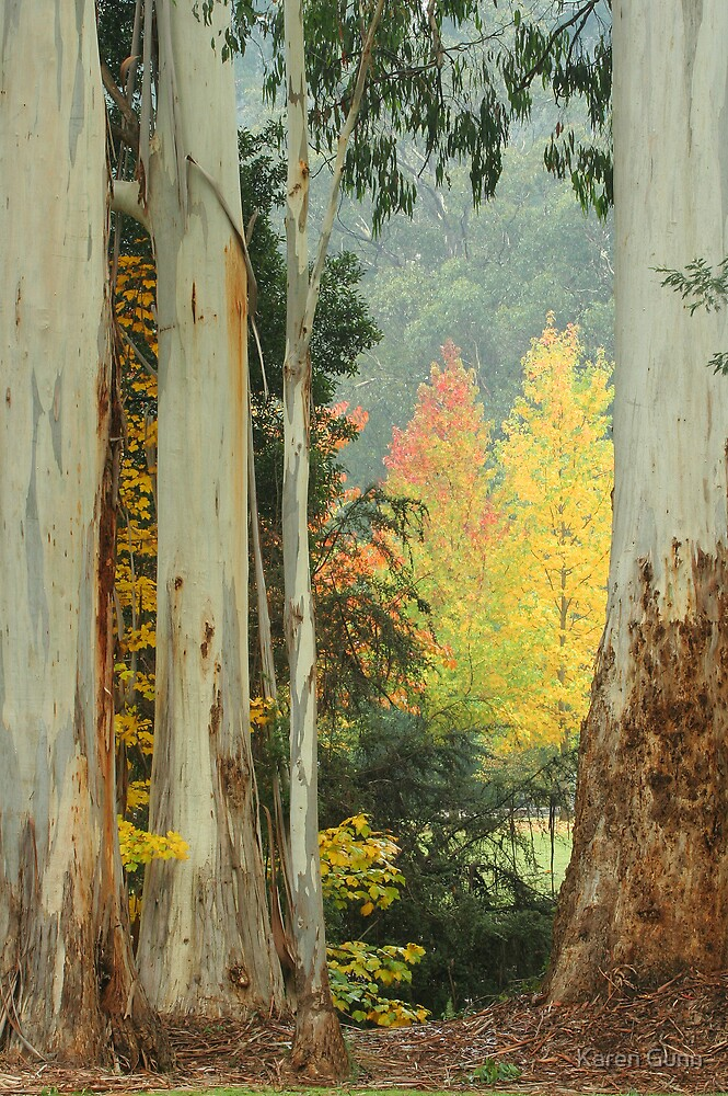 Australian Autumn  by Karen Gunn