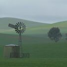 Misty Rain Southern Flinders Ranges by Joe Mortelliti