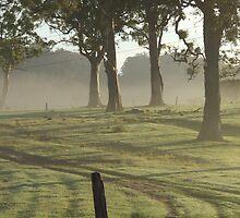 Mist in Trees by atacj05
