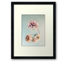 pale and tender Framed Print