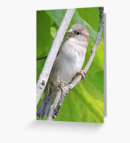Dainty (With Wings) Greeting Card