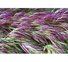 Colorful Grasses Photographic Print