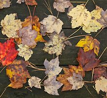 Leaves and Needles by John Butler