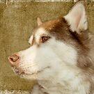 Husky 11 by Rebecca Cozart