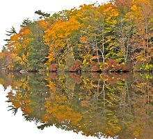 Magnificent Reflection by John Butler
