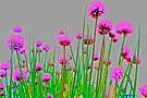 Blazing Chives by John Butler