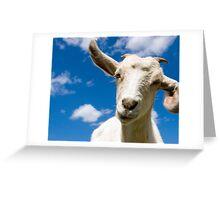 Wink, wink! Greeting Card