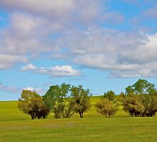 Trees in a Springtime Meadow by John Butler