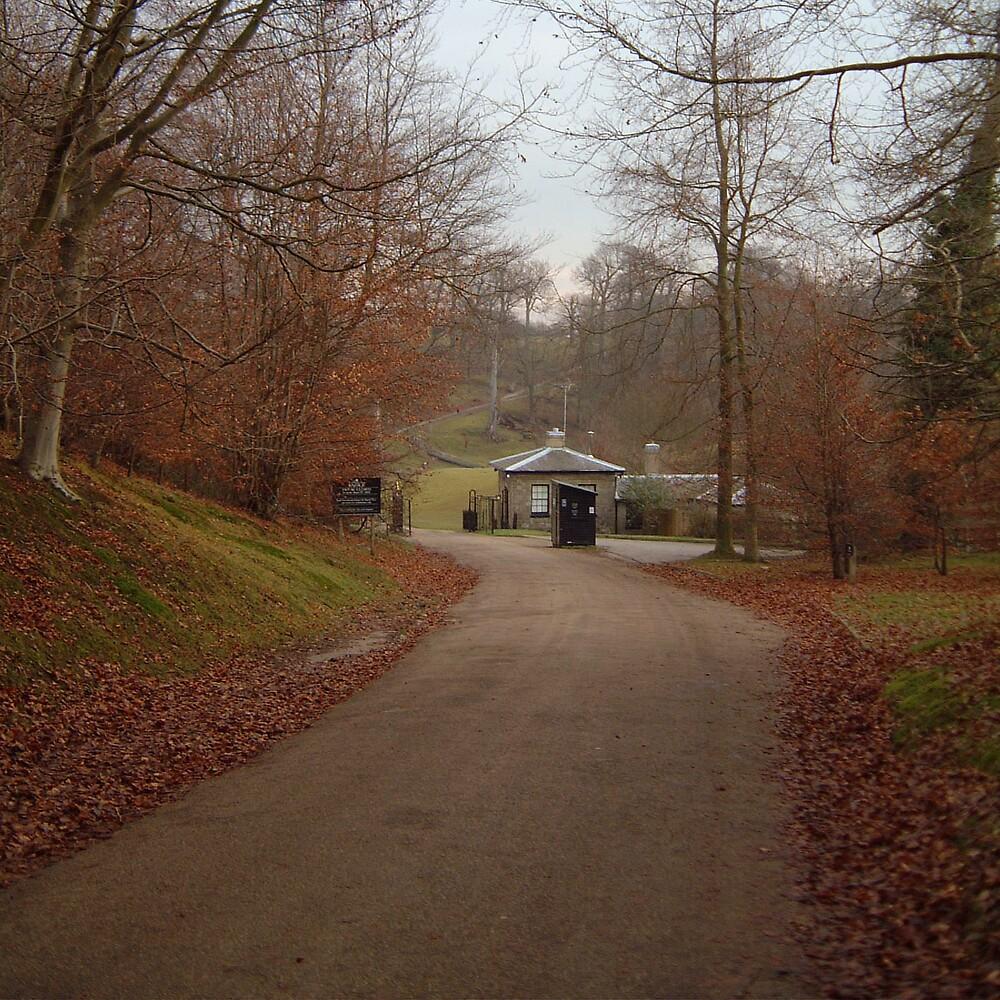 autumn drive by Devan Foster