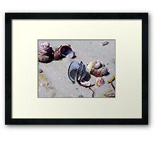 Seashells... Framed Print
