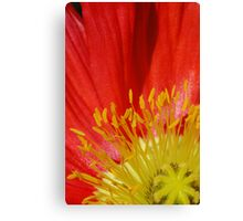 Red, but not a rose Canvas Print