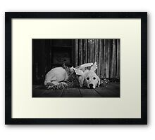 Black and white christmas angel Framed Print