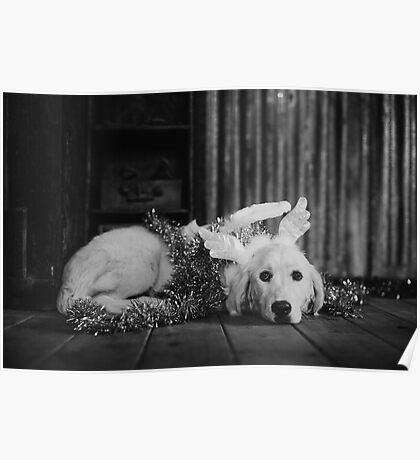 Black and white christmas angel Poster