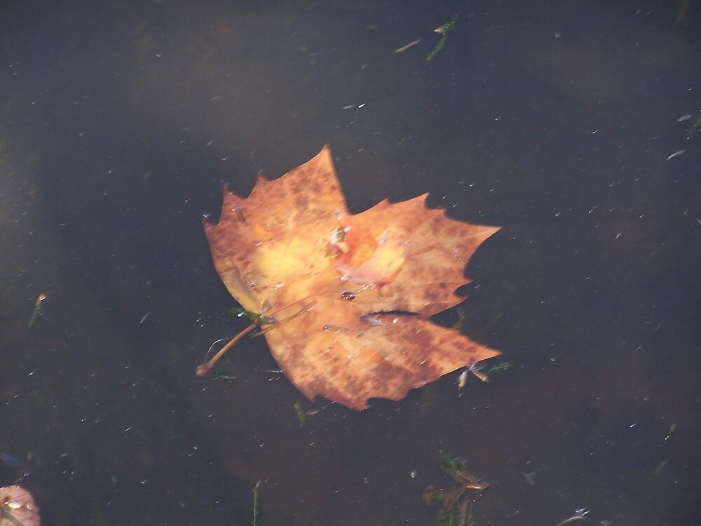 Autumn by Princessbren2006
