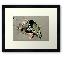 Seashell.. Framed Print