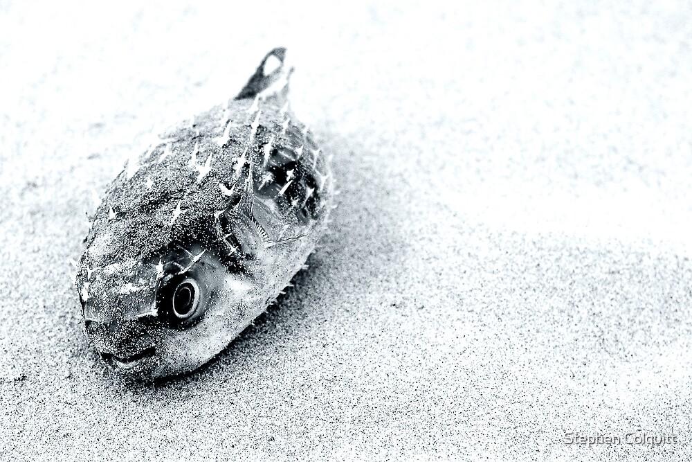 Death on the beach by Stephen Colquitt