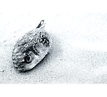 Death on the beach Photographic Print