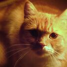 Glamour shot of Cosmo by Taniuska