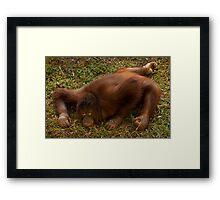 Crouching Ape, Hidden Assets Framed Print
