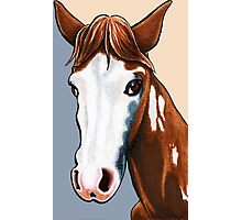 Willy the Horse Photographic Print
