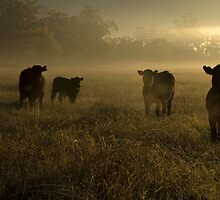 cows by Katie101