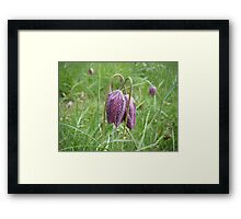 Cuddling Flowers Framed Print