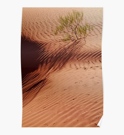 Lone Shrub and Sand Patterns, Simpson Desert Poster