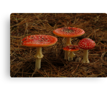 Red Fungi,Otway Ranges Canvas Print