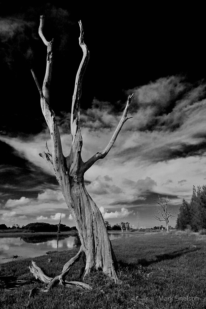 Dead Tree by Mark Snelson