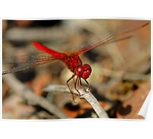 Red Dragonfly 11 Poster
