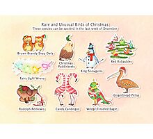 Rare and Unusual Birds of Christmas Photographic Print
