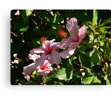 Hibiscus Blossoms Canvas Print