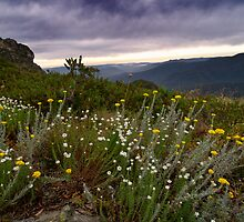 Daisy on Mt Speculation by ShaneBooth
