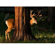 A BUCK BEHIND Photographic Print